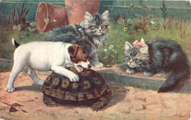 puppy tries to bite turtle, two kittens watch