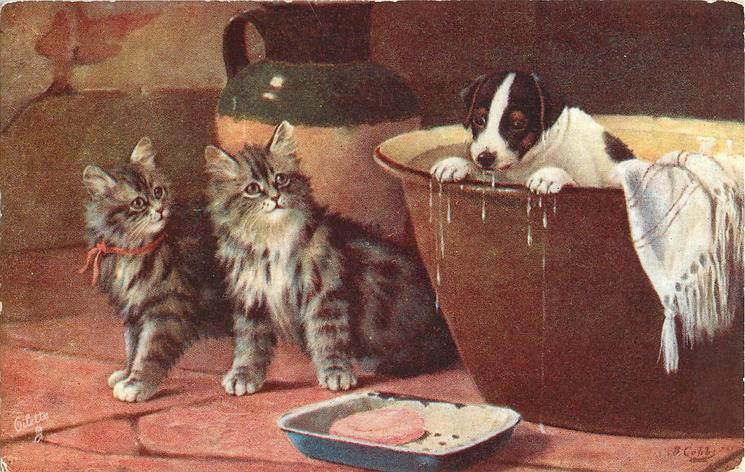 two kittens looking at puppy in bath tub