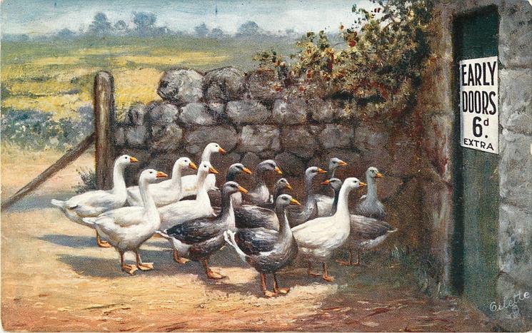 six white & nine gray ducks approaching door, sign on door reads EARLY DOORS 6d EXTRA