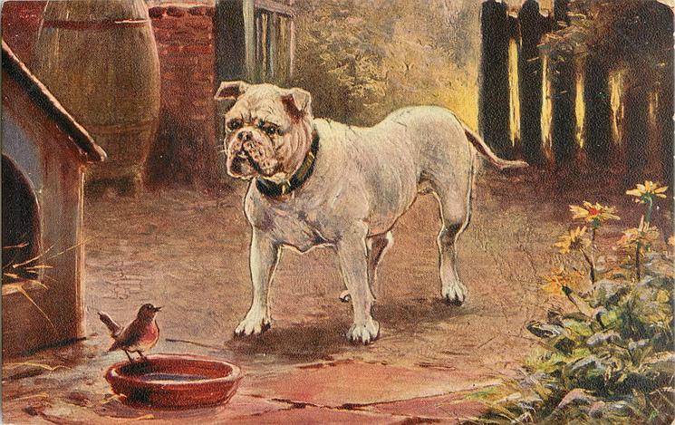 DIGNITY AND IMPUDENCE  bulldog & robin